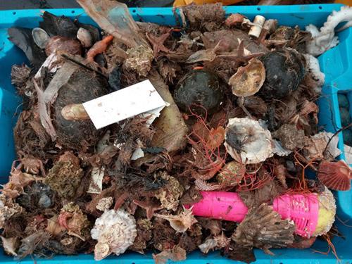 Una de les caixes de captura amb escombreries, obtingudes durant l'estudi. Imatge: Eve Galimany.