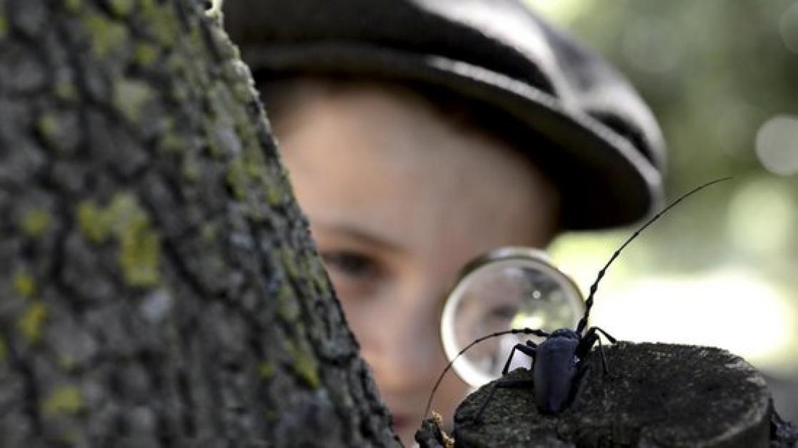 Un nano es mira una somereta del Montsant amb una lupa