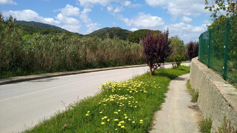 La pluja abundant ha afavorit la proliferació d'herbes i flors arreu. Imatge de Vallromanes (Vallès Oriental)