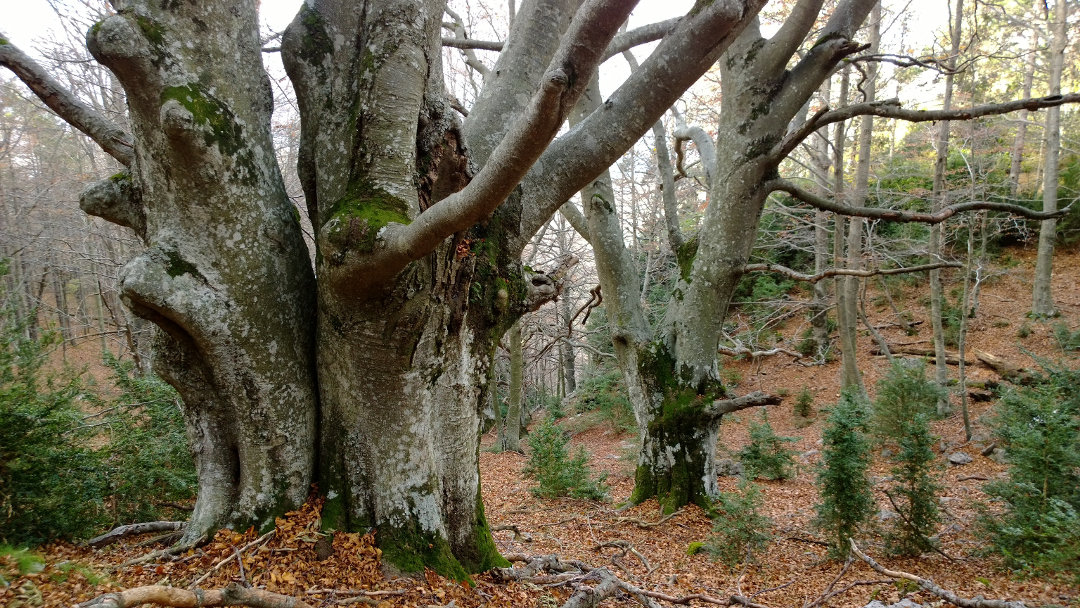 Foto: Associació Selvans