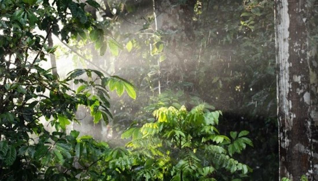 Aquests boscos reben més llum però menys aigua. Foto: CCBY Unsplash