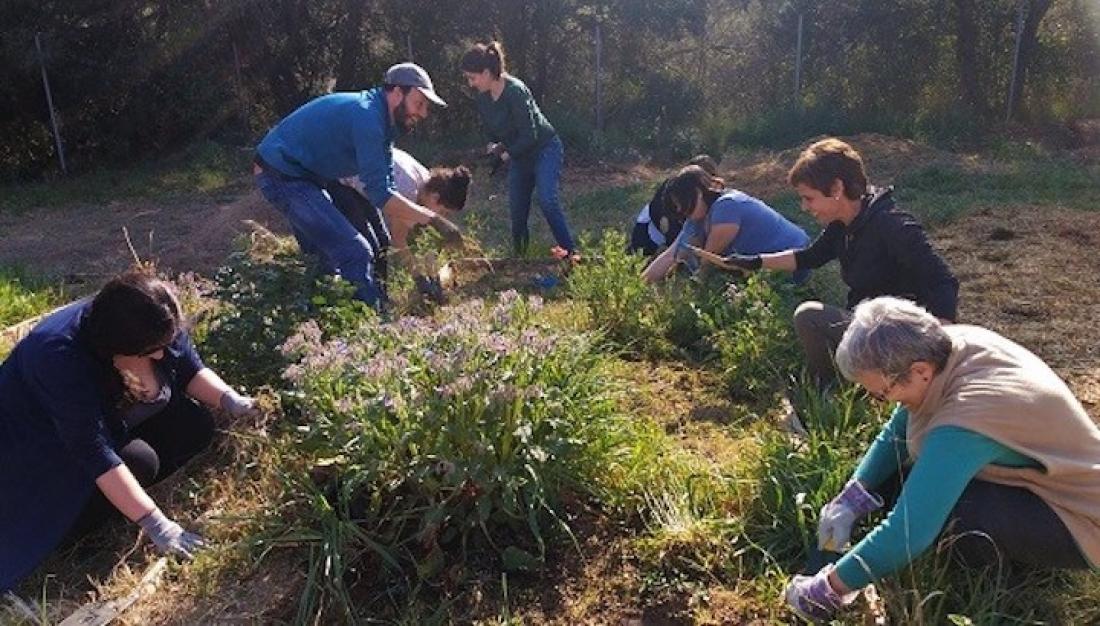 Els horts comunitaris reforcen el companyerisme i les activitats compartides. En aquesta foto es pot observar el treball en un bancal. Crèdit: Anna Àvila.