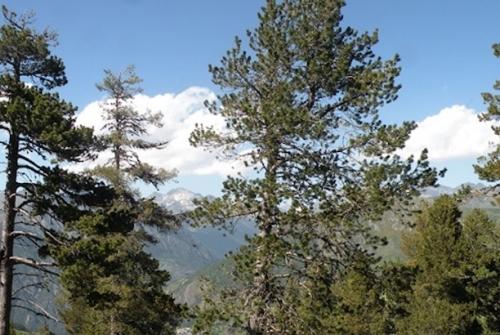 Per primera vegada, s'analitza l'impacte de la sequera extrema sobre el creixement dels arbres fins gairebé una dècada després de l'esdeveniment. Imatge: CREAF