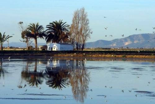Paisaje de la Reserva Ornitológica de Riet Vell, en el Delta del Ebro. @SEO/BirdLife
