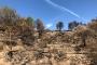 Zona cremada a Seròs durant l'incendi de la Ribera d'Ebre