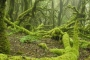LIFE Nieblas recull amb un col·lector minúscules gotes d'aigua en suspensió a la boira i la rosada, per recuperar els boscos i aqüífers de dues zones de l'illa de Gran Canària. Imatge: La Provincia